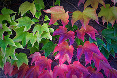 Clichés d'automne