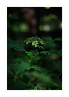 2018/9/22 - 15/24 photo by shin ikegami. - SONY ILCE‑7M2 / Carl Zeiss C Sonnar T* 1.5/50 ZM