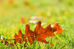 Октябрь