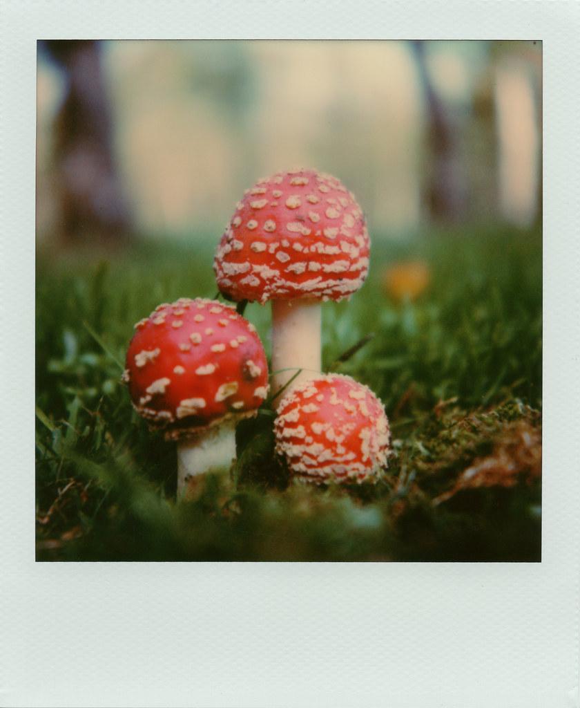 Autumn Fairytale (Entry 1/2)