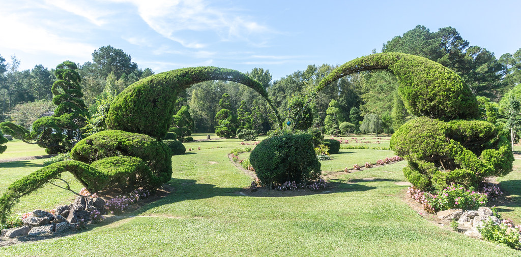 Topiaries Form an Archway at Pearl Fryar Topiary Garden, Bishopville, S.C., Oct. 5, 2018.