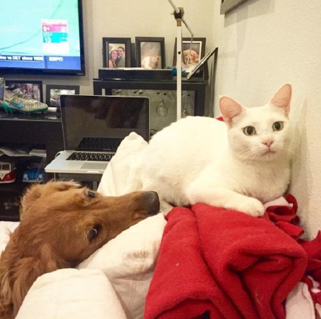 котенок который решил, что он собака фото