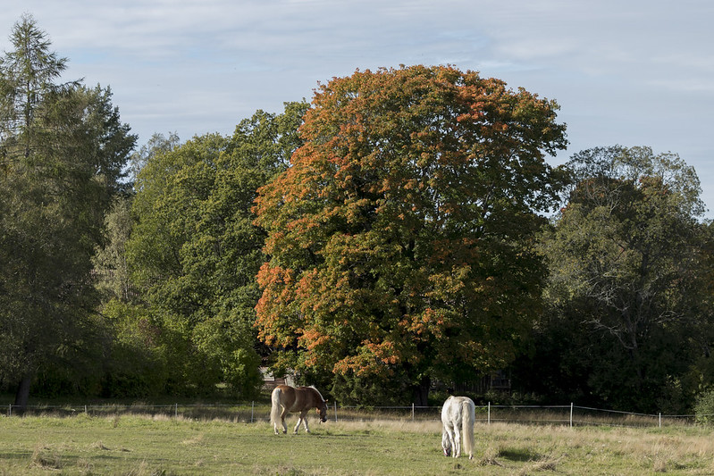Early autumn in the pasture