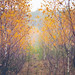 autumn /explore by Pawelus