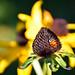 Ladybird in autumn