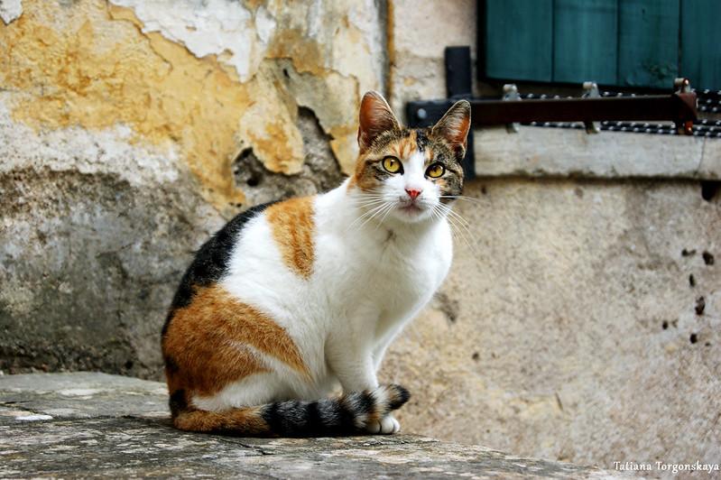 Кот сидит возле дома