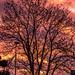 Sunset taken right outside of my front door, London Colney, Hertfordshire.