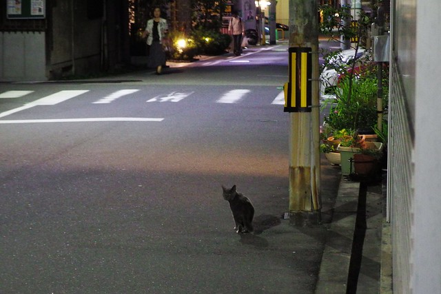 Today's Cat@2018-09-26