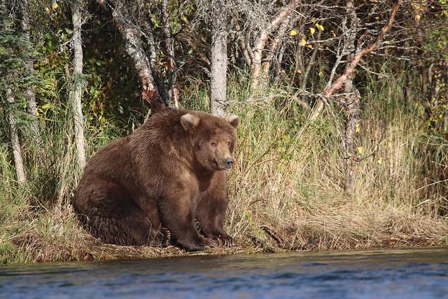 Bear 409, September 2018