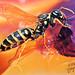 Sweet tooth  (Yellow jacket wasp) by irishishka
