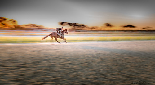 sunrise racetrack horse horseracing training trainingride jockey trainer speed panning motionblur cinematic artistic poetry poetryinmotion beauty racehorse inspirational