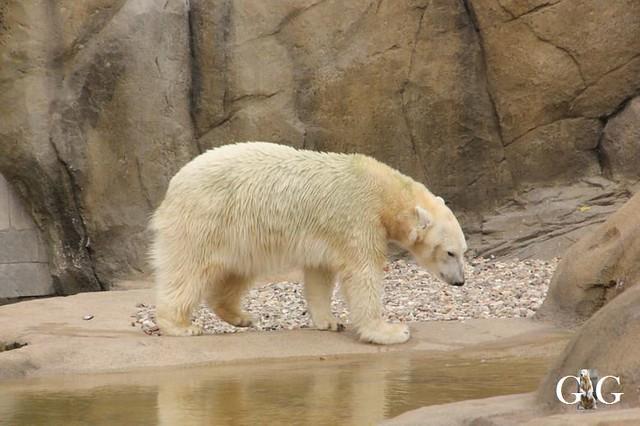 Besuch Zoo Rostock 20.10.201826