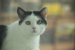 Cat of the day  #cat #animal #head #fur #hair #beauty #kitten #portrait #feline #pet