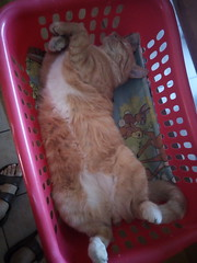 IMG_20180916_115545 - Photo of Montner