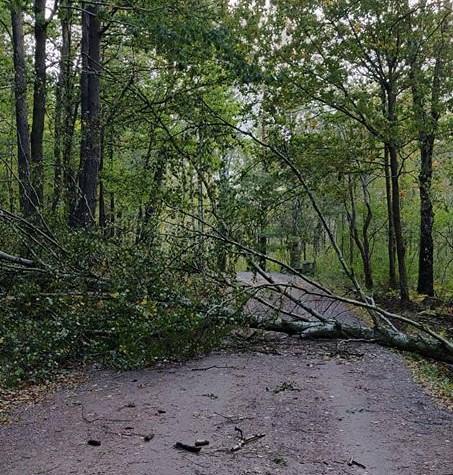 fallen tree skatås