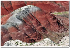 Petrified Detail from the Painted Desert