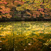Autumn leaves with reflection in the lake.
