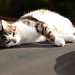 Canal-boat cat | Grand Union Canal Walk | Oct 2018-8