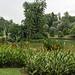 Eco Lake,Singapore Botanical Gardens