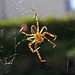 Season of Spiders:   268/365