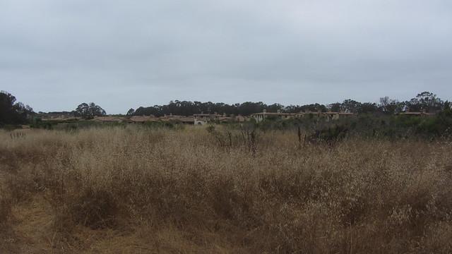 IMG_4844 Ellwood Sperling The Bluffs across dry grass field