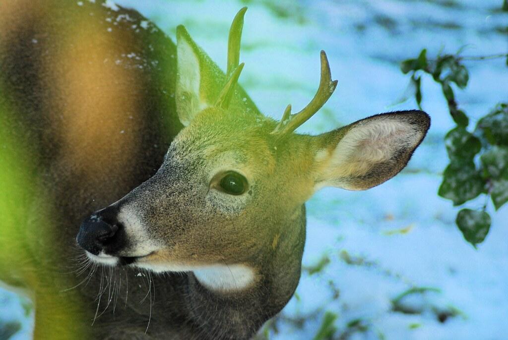 2018-10-09.deer9