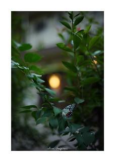 2018/9/22 - 6/24 photo by shin ikegami. - SONY ILCE‑7M2 / Carl Zeiss C Sonnar T* 1.5/50 ZM