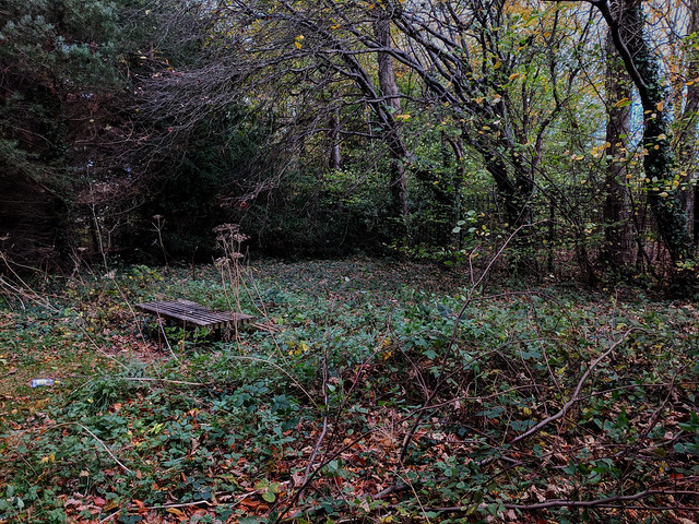 Overgrown Bench