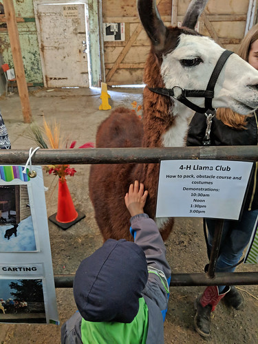 4-H Llama Club demonstration Festival Barn Woodstock Fleece Festival 2018 by irieknit