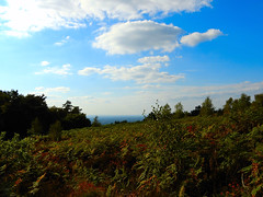 Macclesfield-201809-34-TheCloud-FernsView