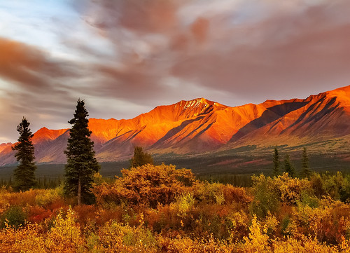 Alaskan Fall Colors