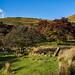 Dick Clough Autumnal Colours