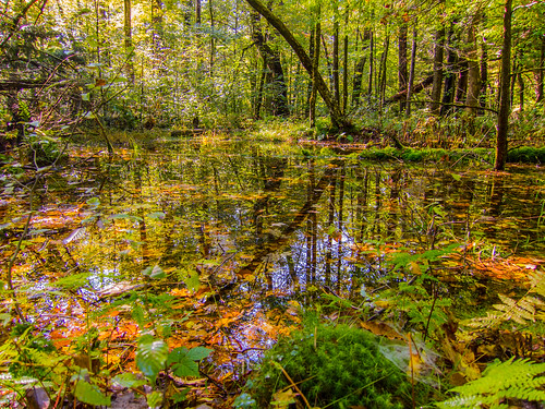 odc intothebeautiful forest fall autumn landscape woods woodland water pond reflections canons95 nature sullivancounty