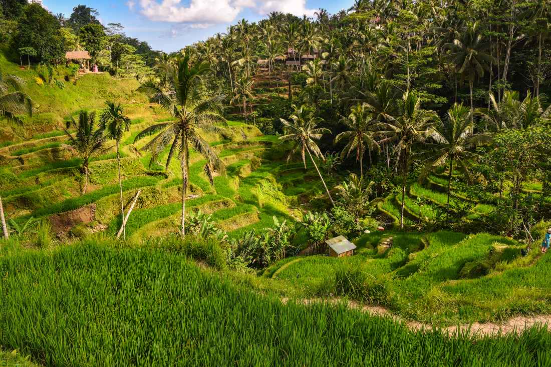 Ubud-Intertainment-(10)