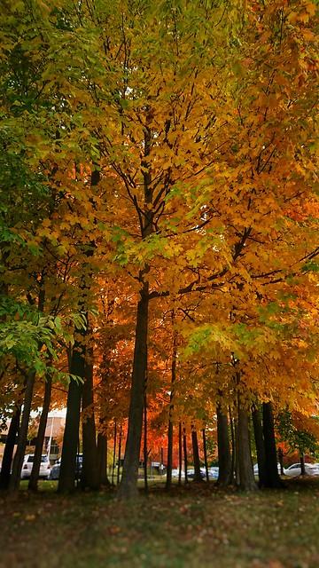 Last real days of autumn