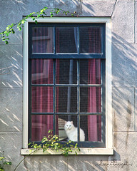window cat in amsterdam
