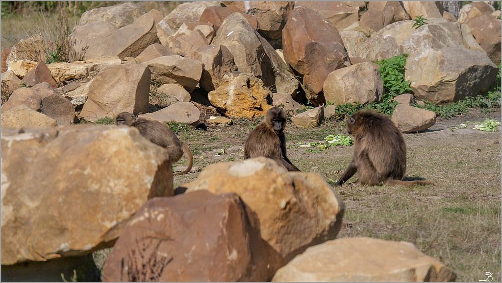 Terre des singes part4 44955742052_a0d0f94d03_b