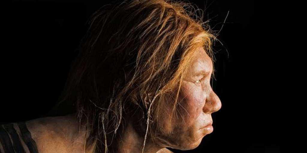 Les Néandertals ont aidé Homo sapiens à résister à la maladie