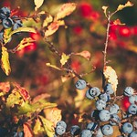 Fruit Nature Bokeh - Fehmarn - Schleswig-Holstein - Germany