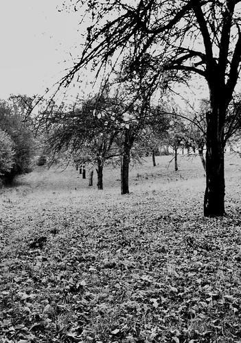 Orchard leaves (buckaroos70)