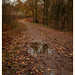 Last throes of autumn(5)