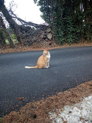 IMG_20180916_083144 - Photo of Montner
