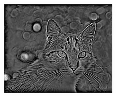 Portrait of cat .
