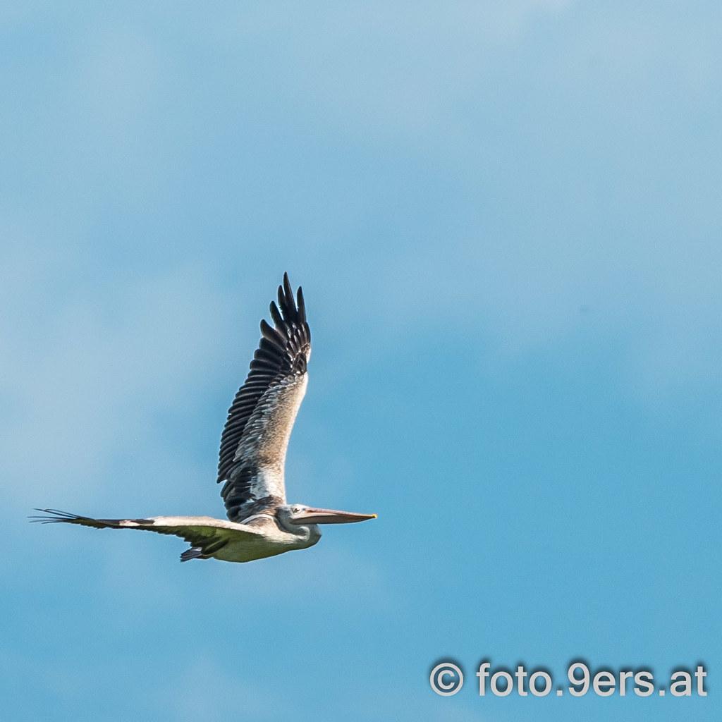 Birds in Sri Lanka (3 out of 3) #srilanka #ceylon #travel #bird #photography #asia #traffic #travelphotography #blog.9ers.at