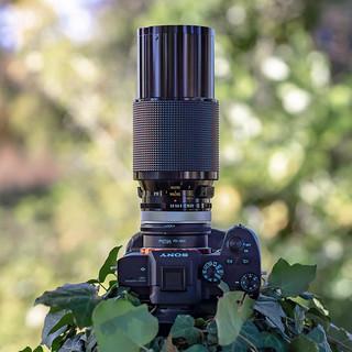SONY ⍺7III & vintage manual Vivitar Series 1 3.5/70~210mm VMC Macro (v1, Kiron) seen by SONY ⍺6000 with vintage manual Canon nFD 1.4/50