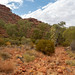 Kings Canyon Valley walk