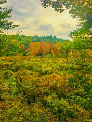 autumn fall trees landscape sullivancounty iphone6s nature