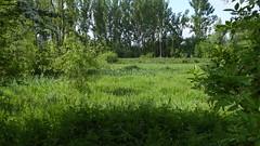 Site naturel du marais des crétes d'Athies (4)