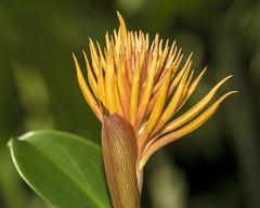 Spindley flower cu