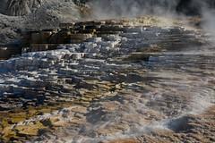 Minerva Terrace at Mammoth Hot Springs - Yellowstone National Park